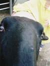 20061104_f1000517